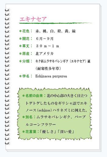 エキナセア花MEMO.JPG