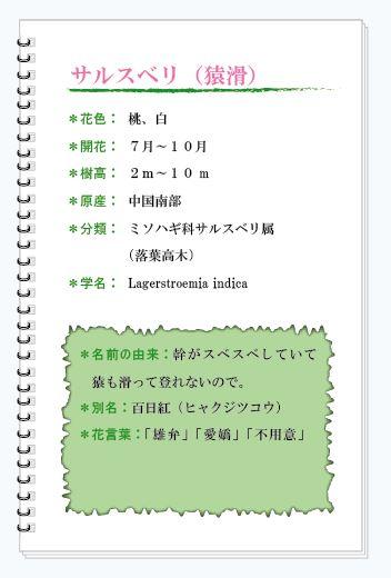 サルスベリ花MEMO.JPG