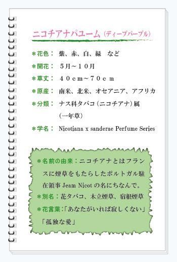 ニコチアナパユーム花MEMO.JPG