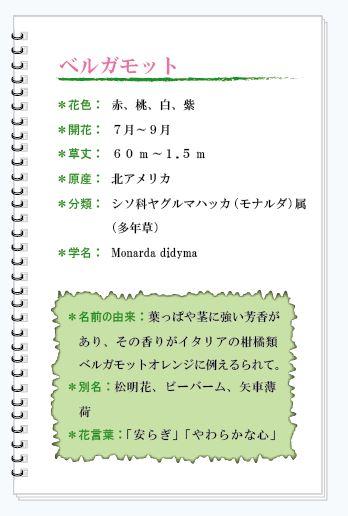ベルガモット花MEMO.JPG