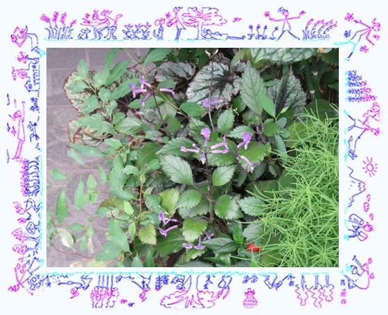 モナラベンダー01.jpg