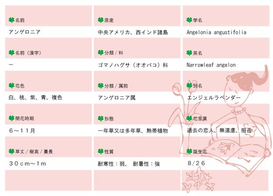 今日の花MEMOアンゲロニア560.jpg