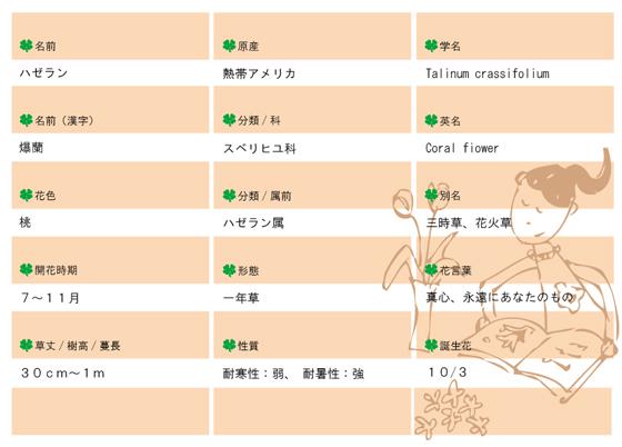 今日の花MEMOハゼラン.jpg