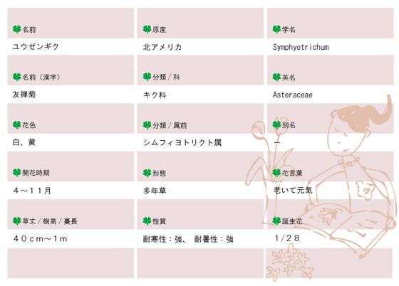 今日の花MEMOユウゼンギク560.jpg