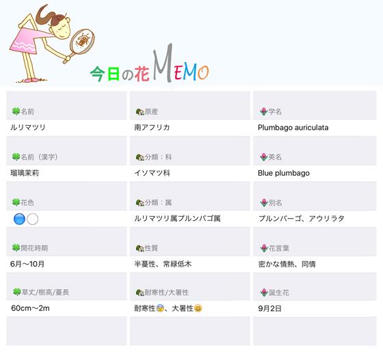 今日の花MEMO新ルリマツリ560のコピー.jpg