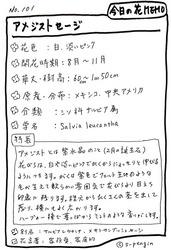 101アメジストセージ.JPG