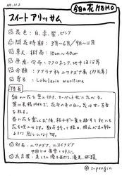 102スイートアリッサム.JPG