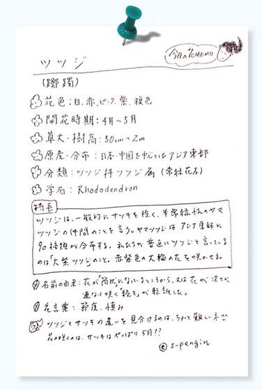 130ツツジ今日の花MEMO.jpg