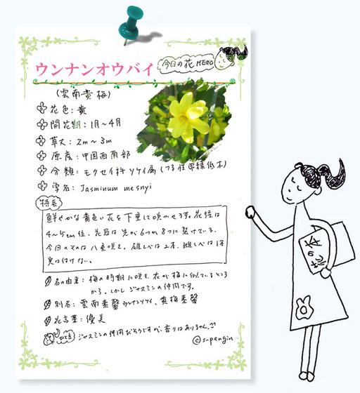 185雲南黄梅花MEMO.jpg