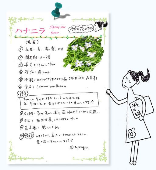 187ハナニラ今日の花MEMO.jpg