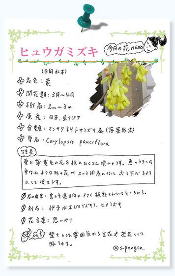 193ヒュウガミズキ花MEMO.jpg