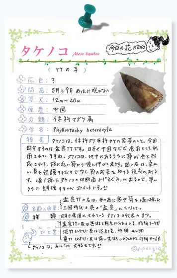 229今日の花MEMOタケノコ.jpg