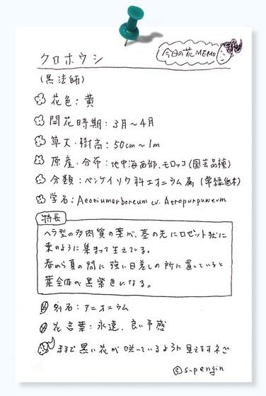今日の花MEMOクロホウシ.jpg
