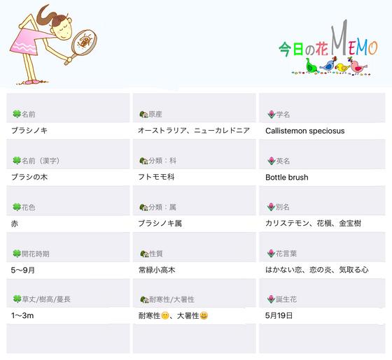 今日の花MEMOブラシノキのコピー.jpg