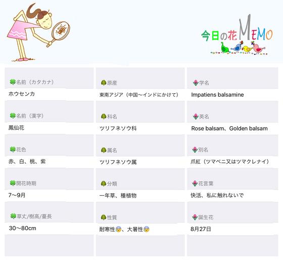 今日の花MEMOホウセンカのコピー.jpg
