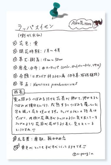 今日の花MEMOラッパスイセン.jpg
