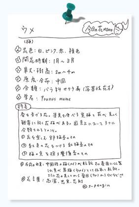 今日の花MEMO紅梅.jpg
