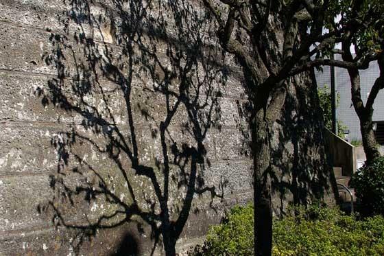 梅の木01 - コピー.jpg