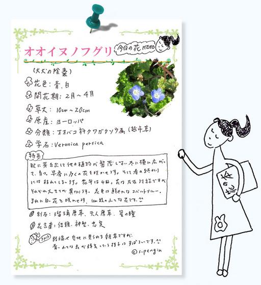 花MEMO183オオイヌノフグリ.jpg