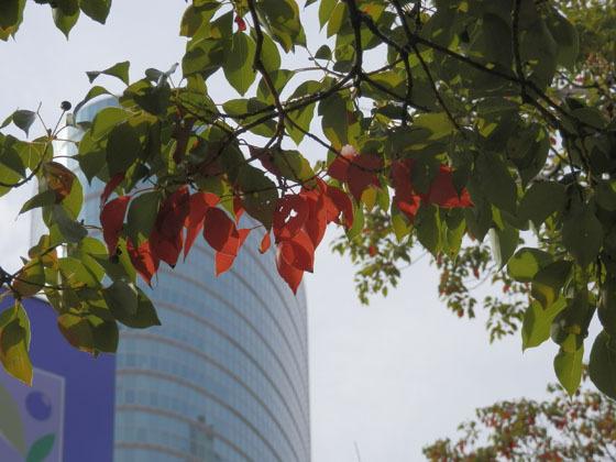 赤い葉っぱ02 - コピー.jpg