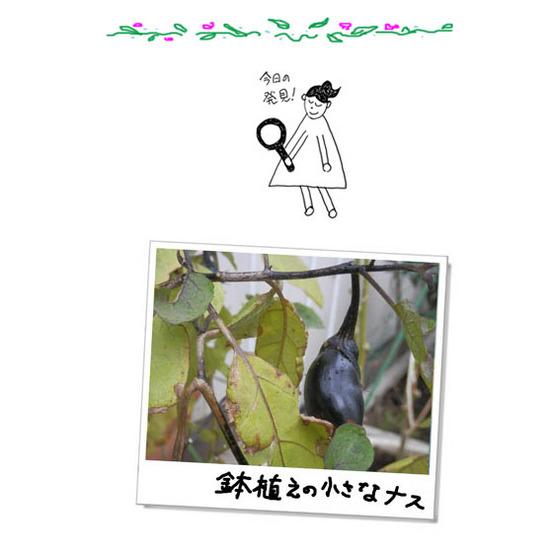 鉢植えの小さなナス02.jpg